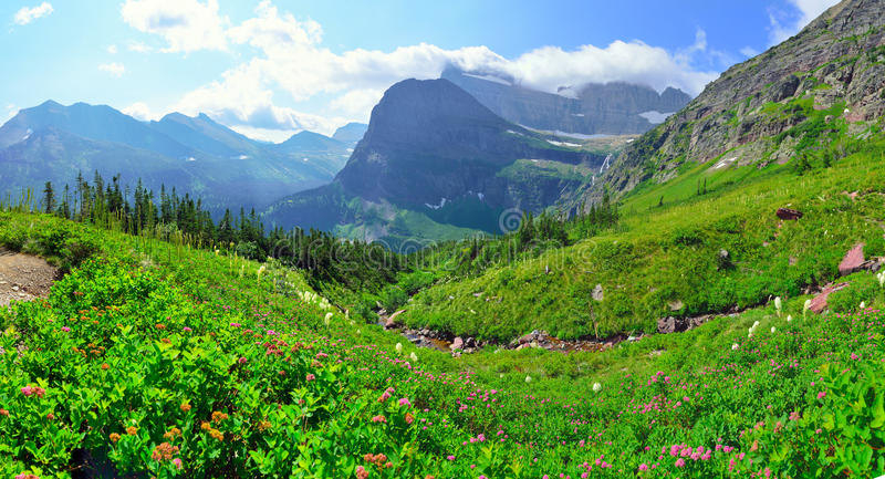 Las flores salvajes en alto paisaje alpino panorámico en el glaciar de Grinnell se arrastran en el Parque Nacional Glacier, Monta imagen de archivo