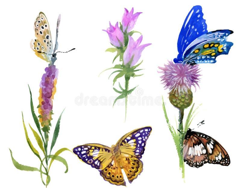 Las flores salvajes y las mariposas de la acuarela fijaron aislado en el fondo blanco ilustración del vector