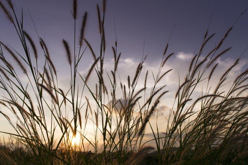Las flores se chiban con el fondo de la puesta del sol del cielo en invierno imagen de archivo libre de regalías