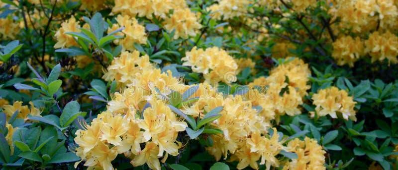 Las flores se cierran para arriba imagen de archivo libre de regalías