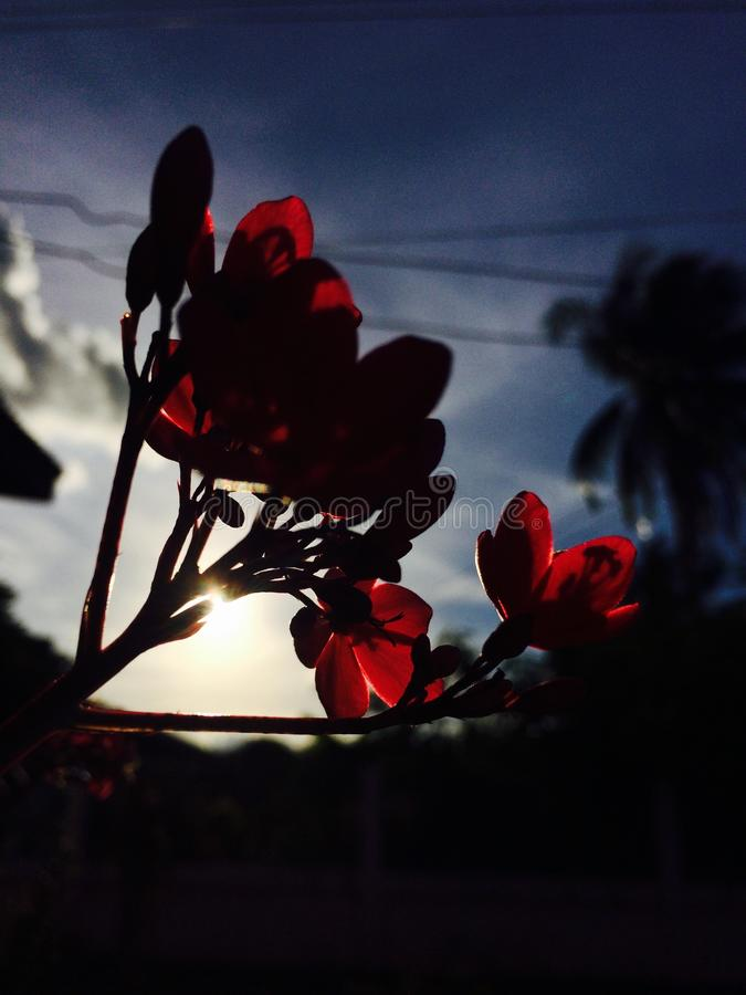 Las flores son magníficas foto de archivo libre de regalías