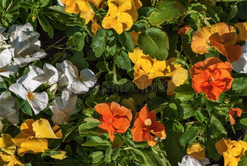 Las flores son maravillas fotografía de archivo