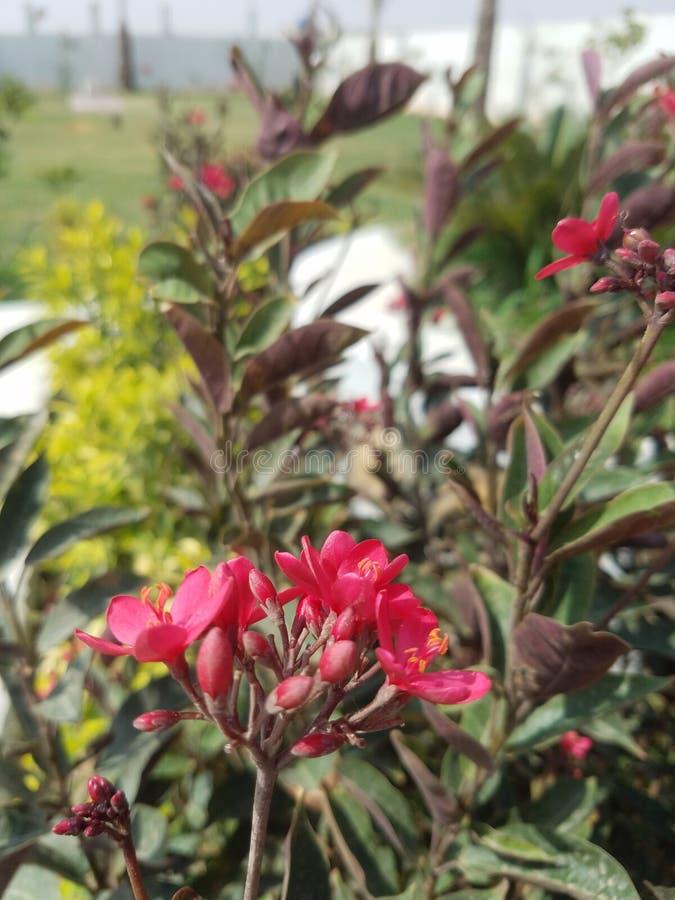 Las flores son vida imagen de archivo libre de regalías