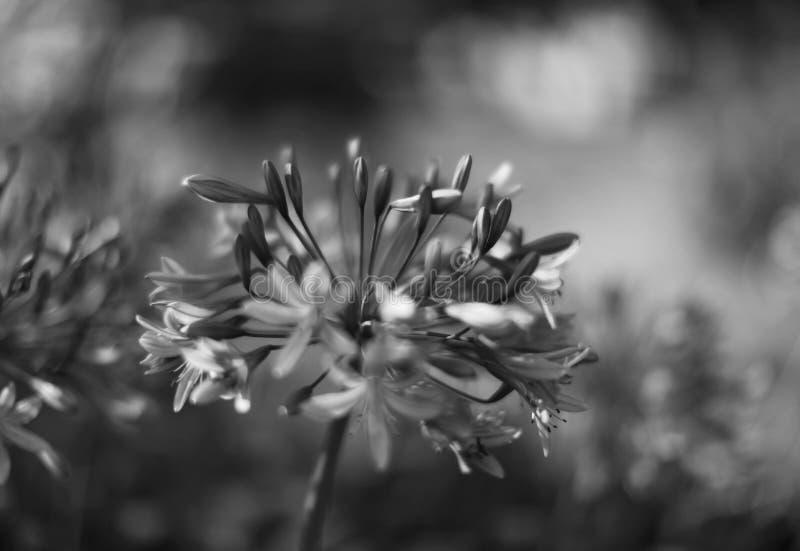 Las flores tiraron en un estilo de la bella arte en un estudio imagen de archivo