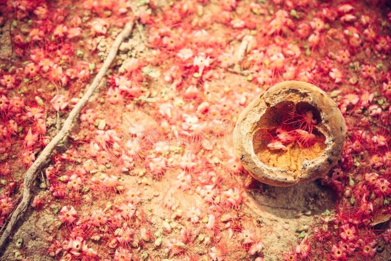 Las flores tropicales rojas románticas cubrieron la tierra como fondo rojo natural en estilo rústico foto de archivo libre de regalías