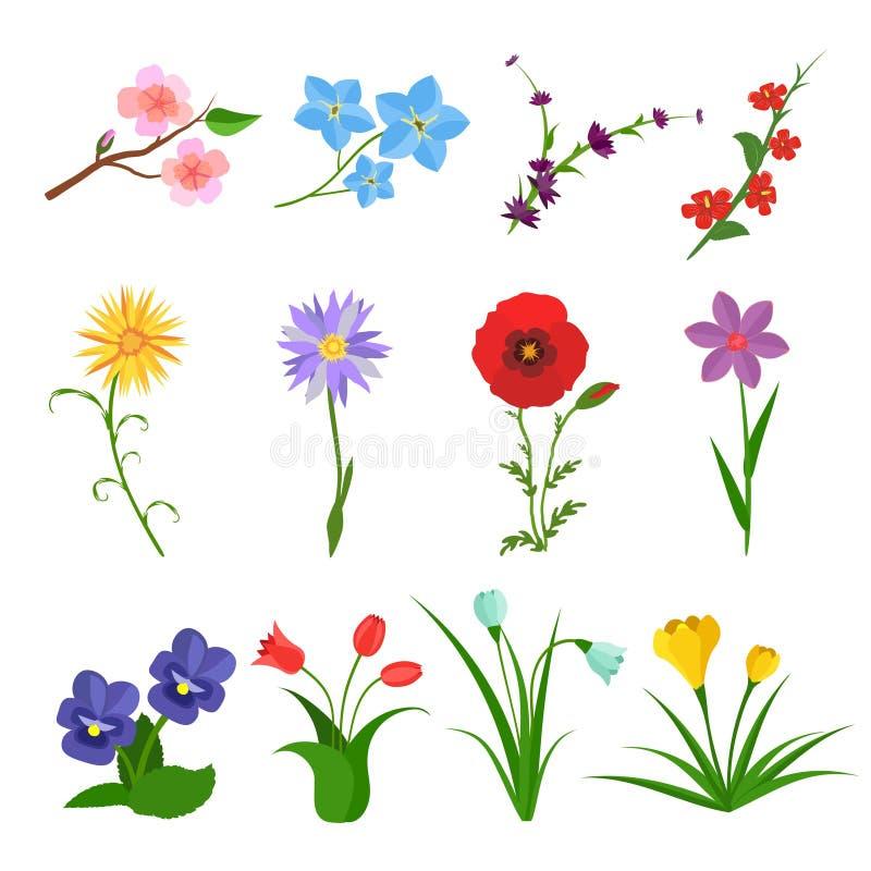 Las flores vector el sistema en el fondo blanco Iconos de la flor salvaje del jardín Iconos florales, primavera del verano plana  ilustración del vector