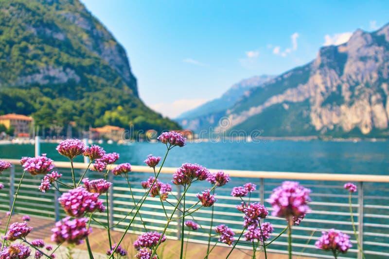 Las flores violetas en los bancos alpinos escarpados del lago hermoso Como con los barcos y los yates parqueados acercan al puebl foto de archivo libre de regalías