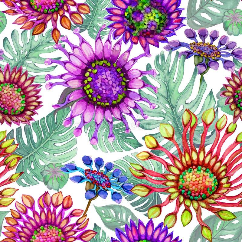 Las flores vivas grandes hermosas de la margarita africana con monstera verde se van en el fondo blanco Estampado de flores brill stock de ilustración