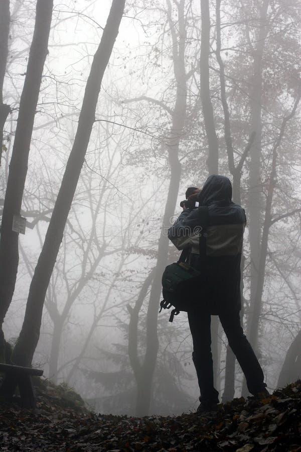 las fotografuje drzewa obraz royalty free
