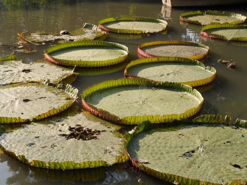 Las fotos del parque del jardín en Bangkok, Tailandia allí son muchos lugares interesantes tailandeses y turistas extranjeros Ven imagen de archivo libre de regalías