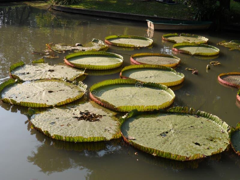 Las fotos del parque del jardín en Bangkok, Tailandia allí son muchos lugares interesantes tailandeses y turistas extranjeros Ven foto de archivo