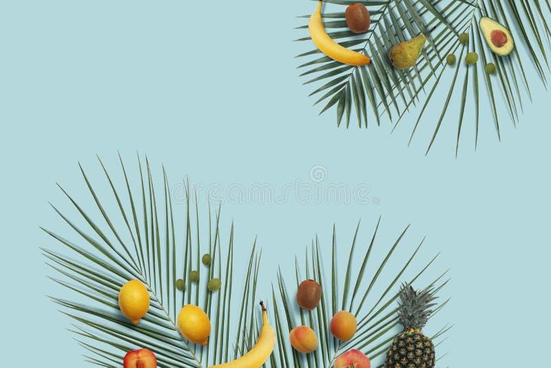 Las frutas del verano ponen completamente con el espacio de la copia en el fondo mínimo azul imagen de archivo libre de regalías