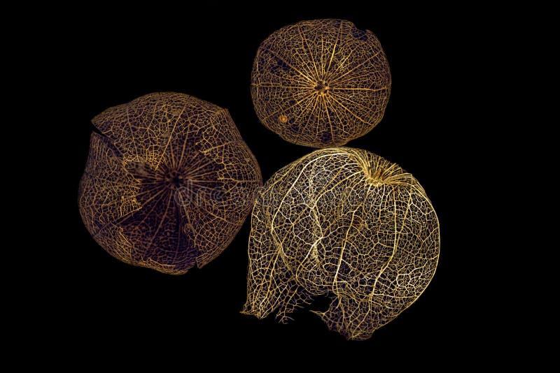 Las frutas secadas del physalis imagenes de archivo
