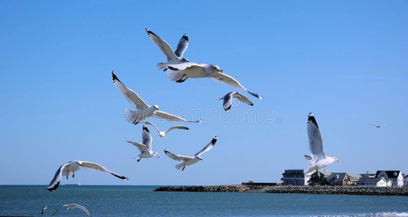 Las gaviotas en vuelo sobre reverencian la playa, mA imagen de archivo libre de regalías