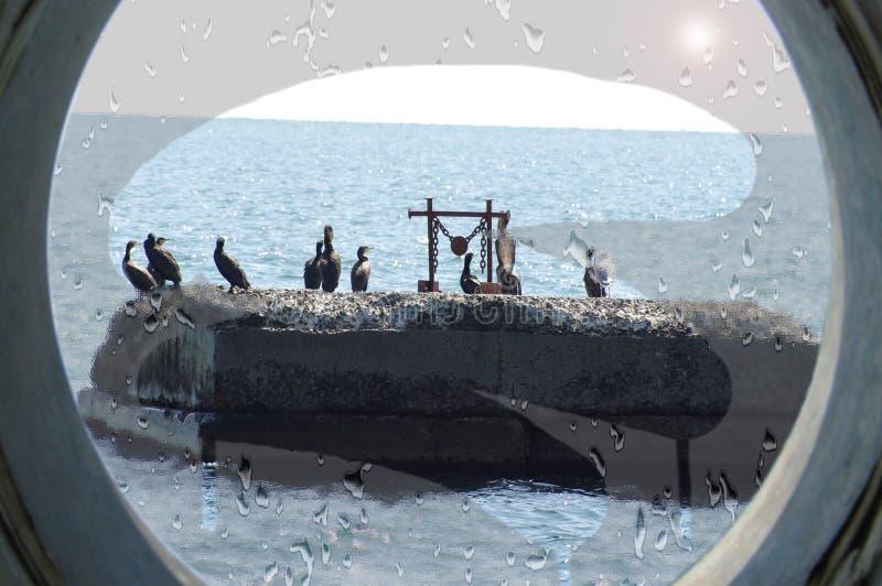 Las gaviotas, pájaros de mar se sientan en una roca fotografía de archivo