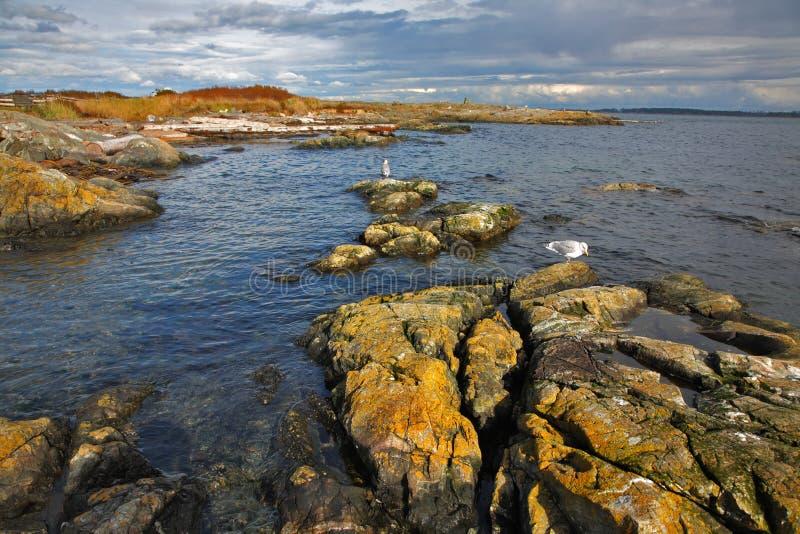 Las gaviotas se sientan en piedras del paso fotos de archivo