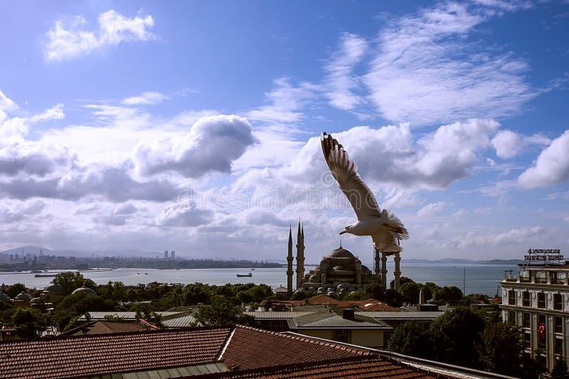 Las gaviotas vuelan sobre los tejados de la ciudad de Estambul Los pájaros se están sentando en un tejado de teja roja Contra la  foto de archivo