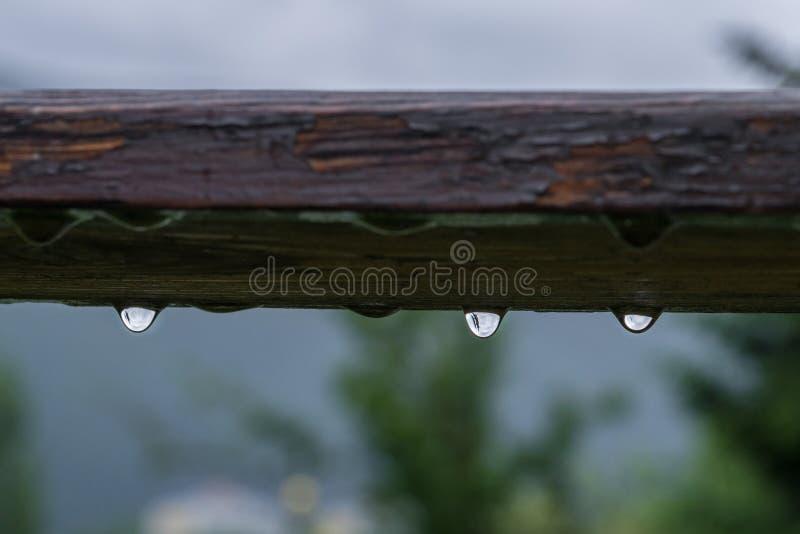 Las gotas de agua que cuelgan de un pedazo de madera después de un verano llueven imagen de archivo libre de regalías
