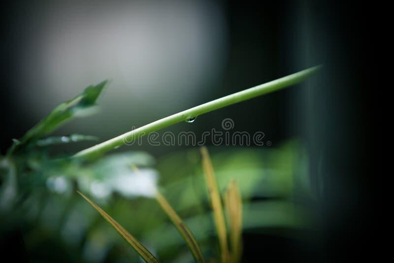 Las gotitas de agua en las hojas después de la lluvia fotos de archivo