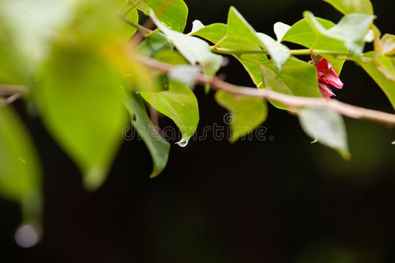 Las gotitas de agua en las hojas después de la lluvia fotografía de archivo