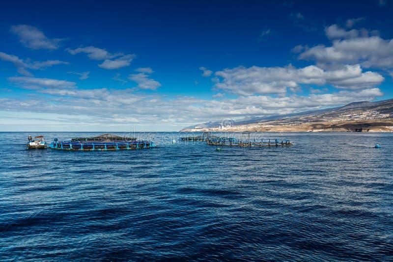 Las granjas de pescados costeras se agruparon alrededor de la costa oeste de Tenerife, España La lubina y la brema común se culti foto de archivo