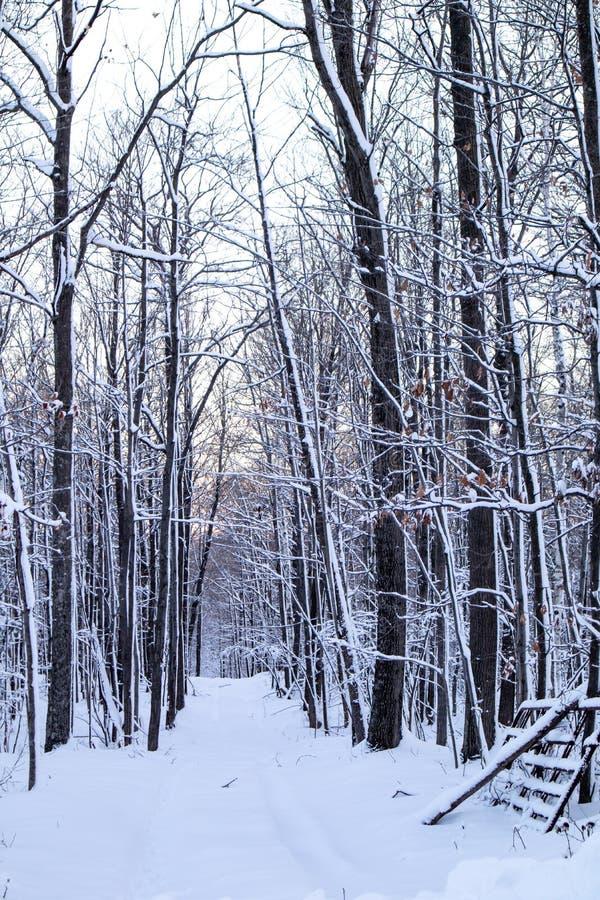 Las Hardwood po burzy śnieżnej w grudniu pionowo obrazy royalty free