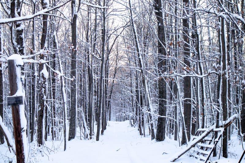 Las Hardwood po burzy śnieżnej w grudniu zdjęcie royalty free