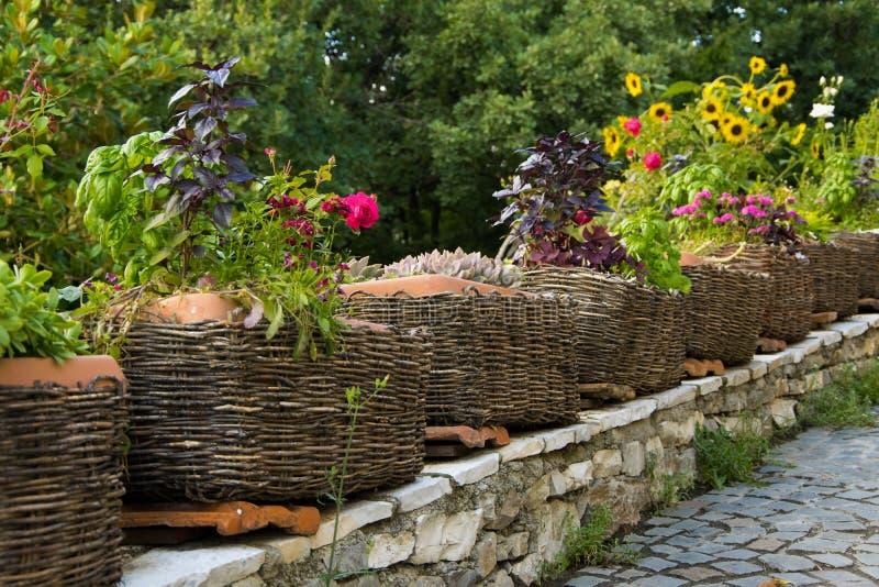 Las hierbas comestibles sanas en conserva en la cesta, cultivan un huerto exterior fotos de archivo libres de regalías