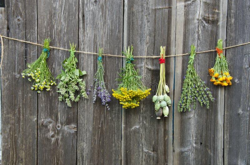 Las hierbas médicas florecen la colección del manojo en la pared de madera imagenes de archivo