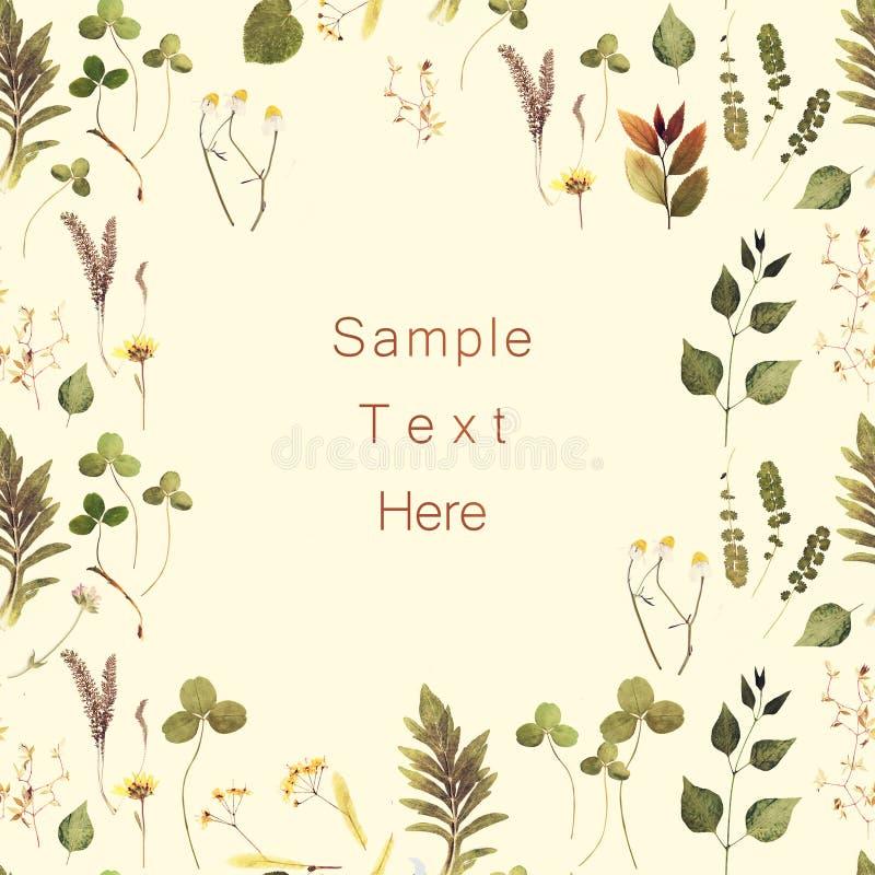 Las hierbas ramifican marco floral en el bacground blanco fotografía de archivo libre de regalías