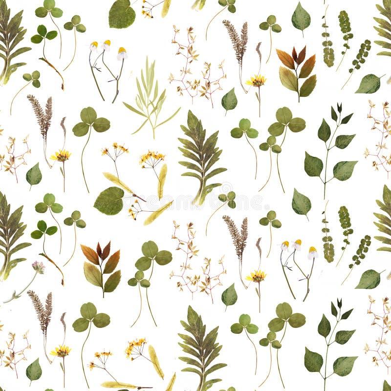 Las hierbas ramifican marco floral en el bacground blanco imágenes de archivo libres de regalías