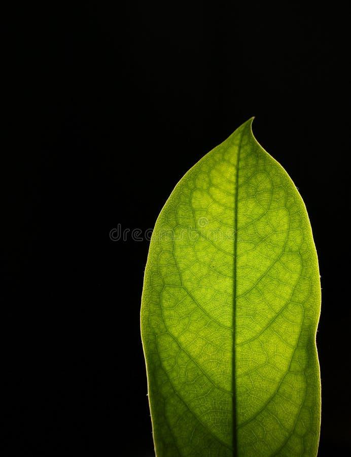 Las hojas imagenes de archivo