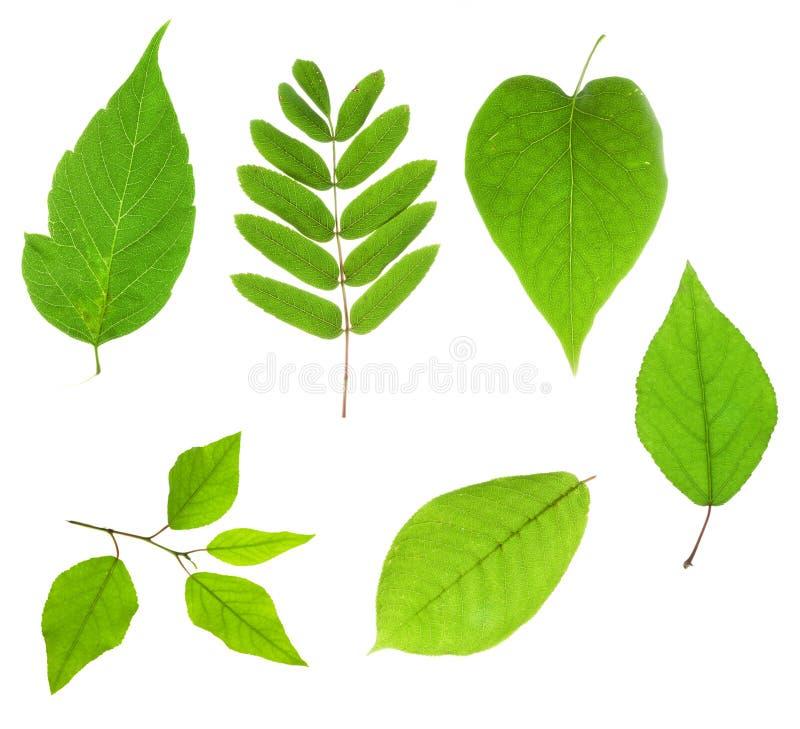 Las hojas aislaron imagen de archivo libre de regalías