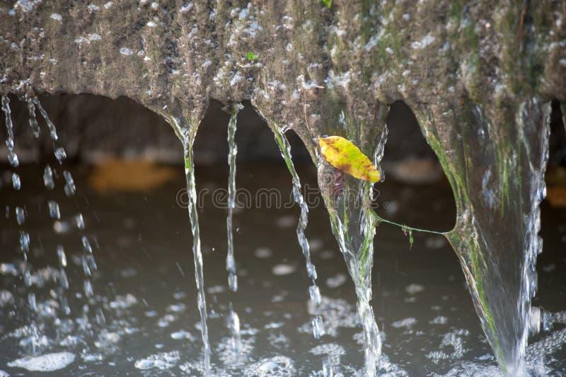 Las hojas amarillas se cierran para arriba en la naturaleza, otoño inminente, naturaleza se descoloran Oto?o en el parque: hojas  imágenes de archivo libres de regalías