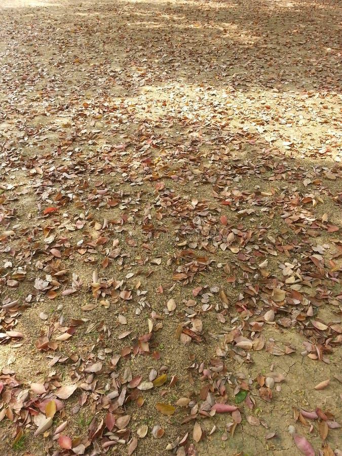 Las hojas caidas foto de archivo