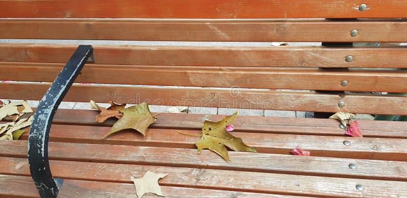 Las hojas caidas ponen en banco de madera imágenes de archivo libres de regalías