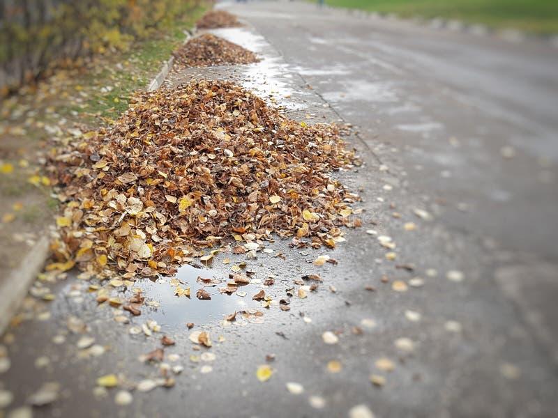 Las hojas caidas se recogen en pilas iguales foto de archivo libre de regalías
