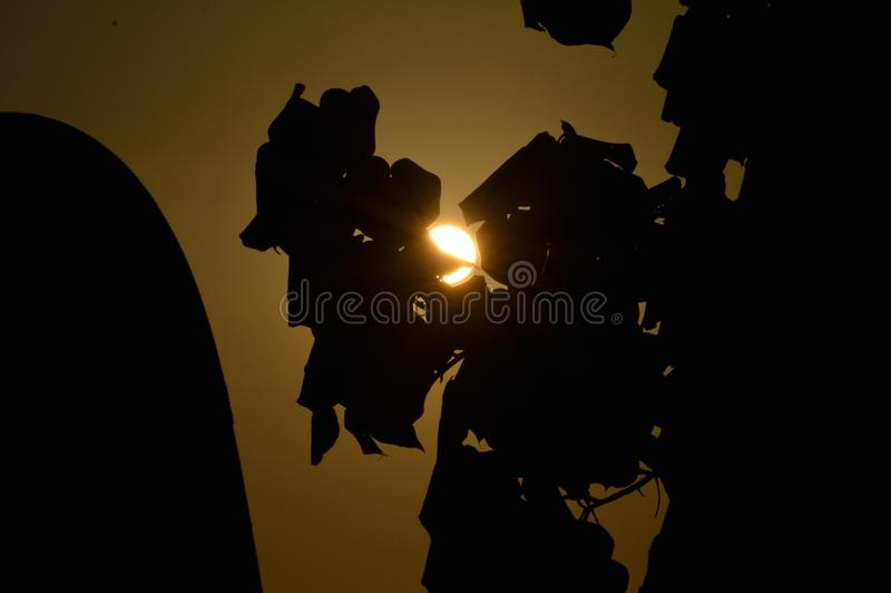 Las hojas cogen el sol imagen de archivo