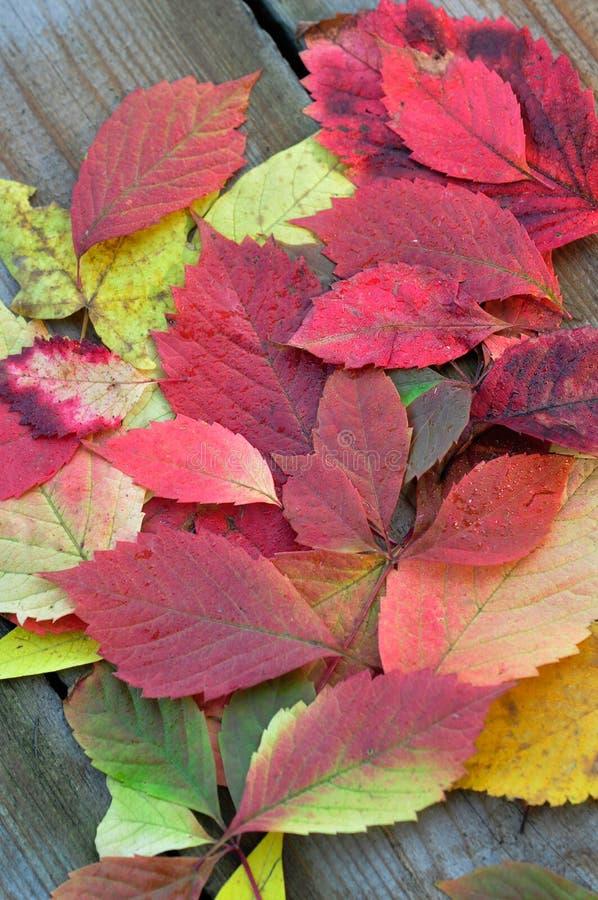 Las hojas coloridas de las hojas de otoño se van bajo imagenes de archivo