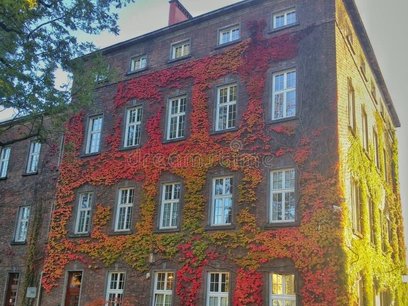 Las hojas coloridas en las paredes del Wawel se escudan fotos de archivo libres de regalías