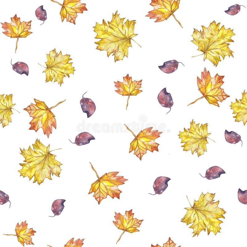 Las hojas de arce inconsútiles de las hojas de otoño del fondo del modelo de la acuarela amarillean en el fondo blanco stock de ilustración