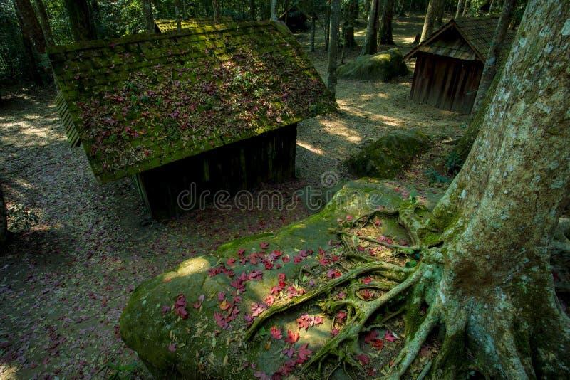 Las hojas de arce rojas sazonan en el phitsanuloke Tailandia del parque nacional del rongkla del hin del phu foto de archivo