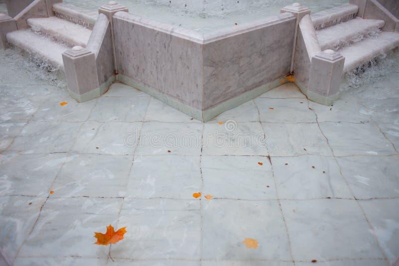 Las hojas de arce rojas y amarillas flotan en la fuente, parte inferior de mármol blanca foto de archivo