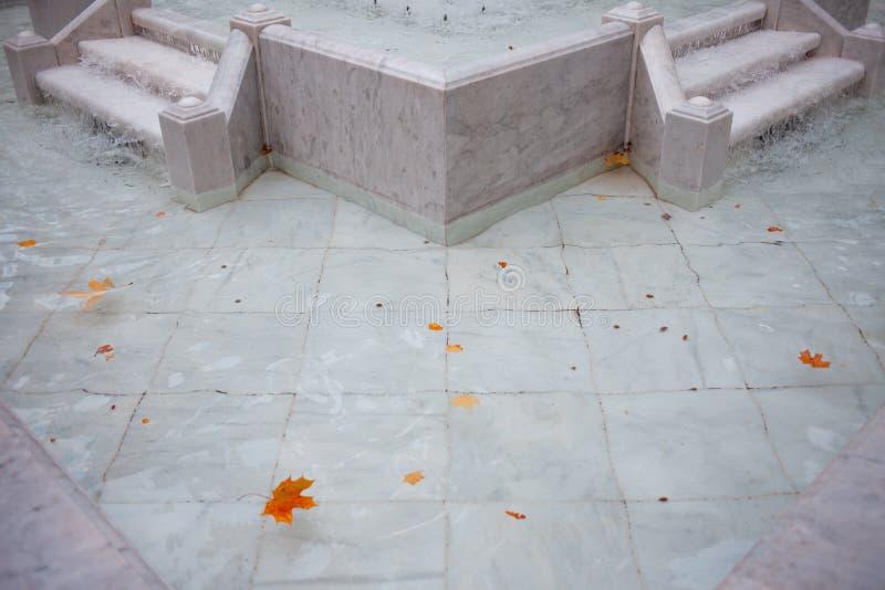 Las hojas de arce rojas y amarillas flotan en la fuente, parte inferior de mármol blanca imágenes de archivo libres de regalías