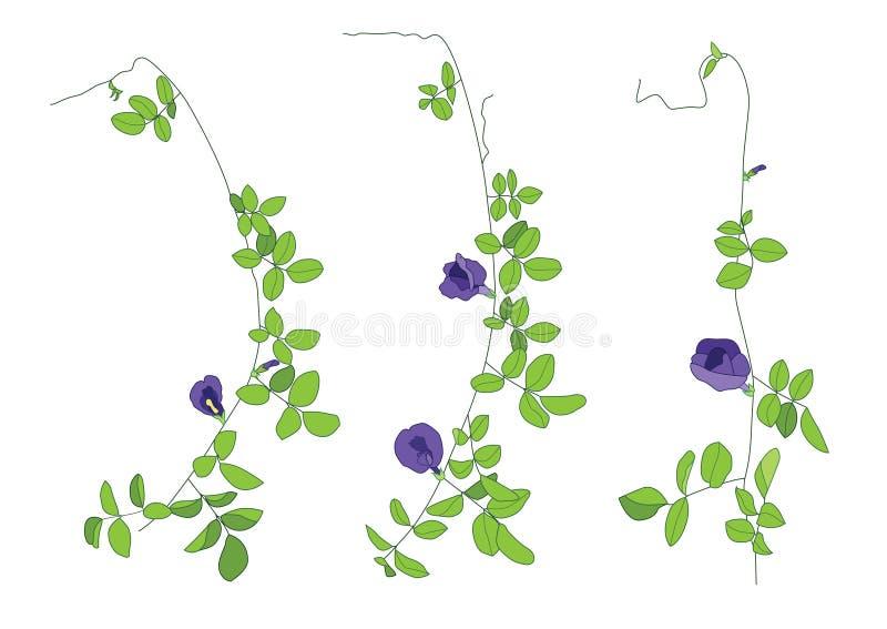 Las hojas de las flores del guisante del color alinearon diseño en el fondo blanco stock de ilustración