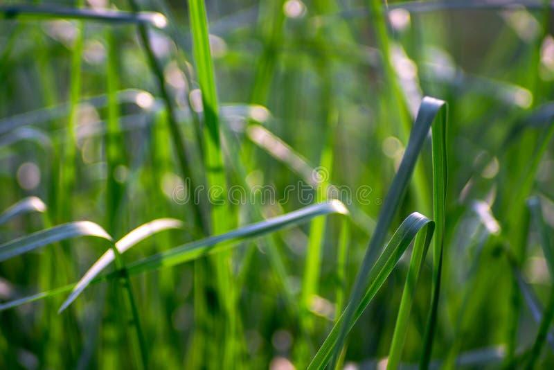 Las hojas de la hierba verde que son suaves y blandas foto de archivo libre de regalías