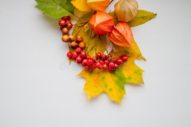 Las hojas de otoño amarillas brillantes, las castañas, los conos del pino y el physalis anaranjado florece en un fondo blanco con fotos de archivo libres de regalías