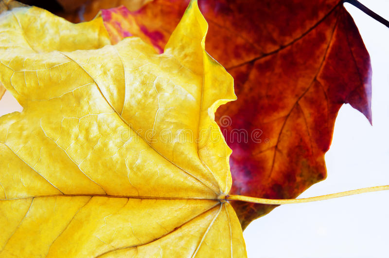 Las hojas de otoño se cierran para arriba imagen de archivo libre de regalías