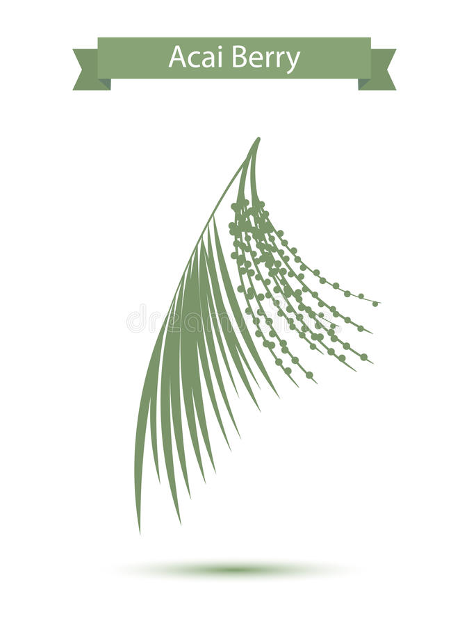 Las hojas de palma de Acai y las bayas del acai vector el ejemplo aislado en el fondo blanco Silueta del verde del acai de Superf ilustración del vector