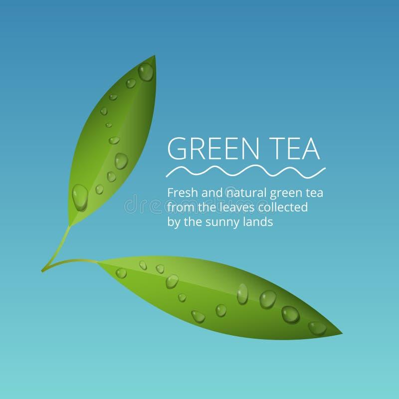 Las hojas de té verdes con agua caen el ejemplo del vector fotos de archivo libres de regalías